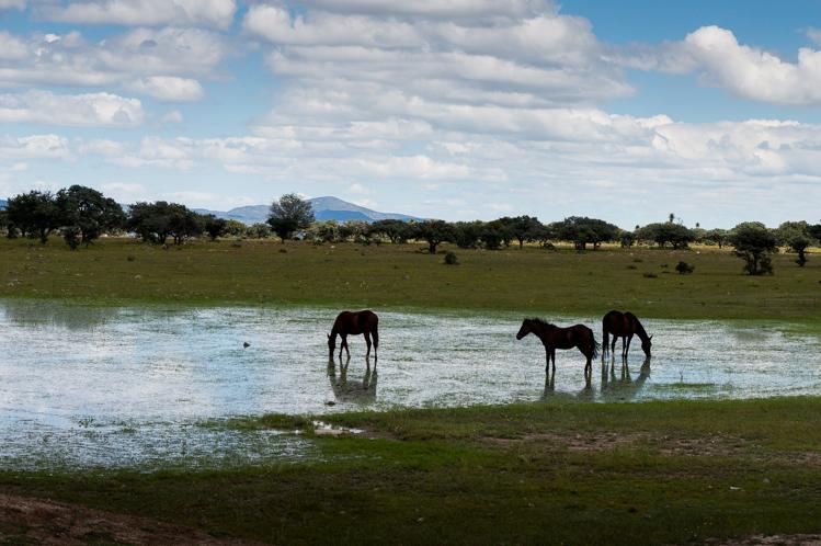 Die Pferde sind überall in Mexico