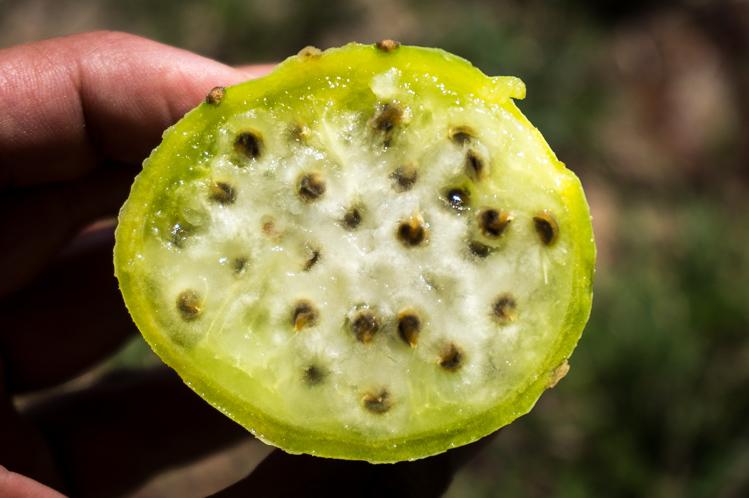 Schmeckt ein bisschen wie Melone