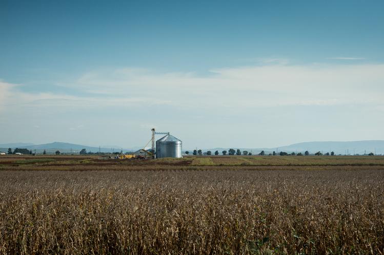 Viel Mais und Getreide wird hier angebaut.