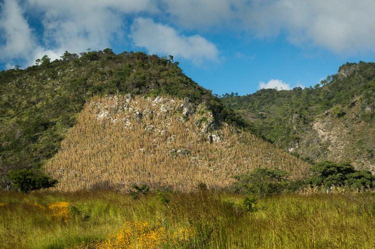 Mais wird auch an den felsigen und steilen Hängen angebaut.