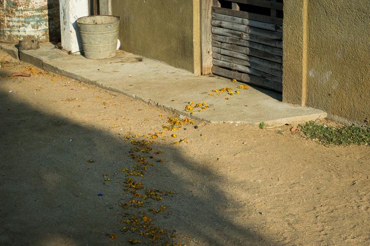 Bei vielen Häusern wird am Feiertag 'Dia de Muertos' eine Spur aus Blumen zur Haustüre gelegt, damit die Toten nach Hause finden